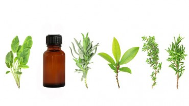 The Wonderful World of Essential Oils – Immunity, Food and Mood