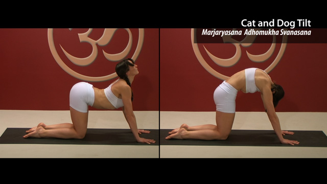 Cat and Dog Tilt – Marjaryasana Svanasana Abhyanati