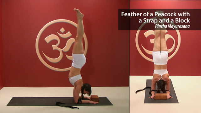 Feather of a Peacock with a Strap & a Block – Pincha Mayurasana