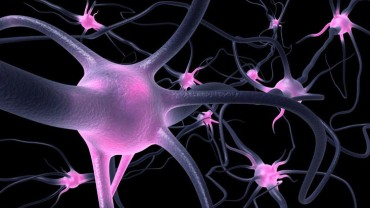 Can Meditation Regenerate the Brain?